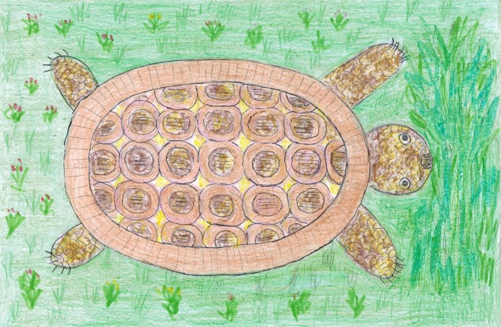 Сен-Санс, Черепаха, 1