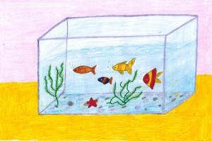 Сен-Санс, аквариум 3